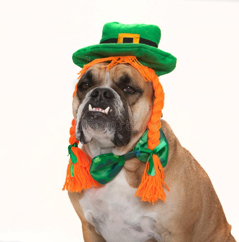 Bulldog dressed for his St. Patty`s Day Celebration. Bulldog in a St. Patrick`s Day hat, wig and orange hair outfit stock photo