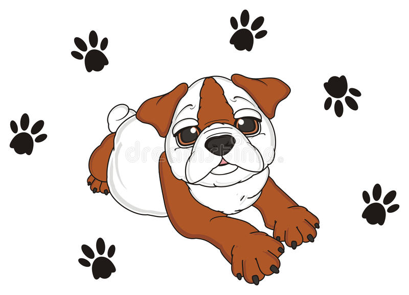 Bulldog with footprints. Puppy of english bulldog lying around a lot of black footprints royalty free illustration