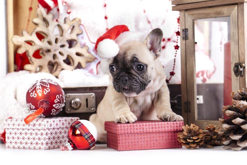 Bulldog francese di natale fotografia stock