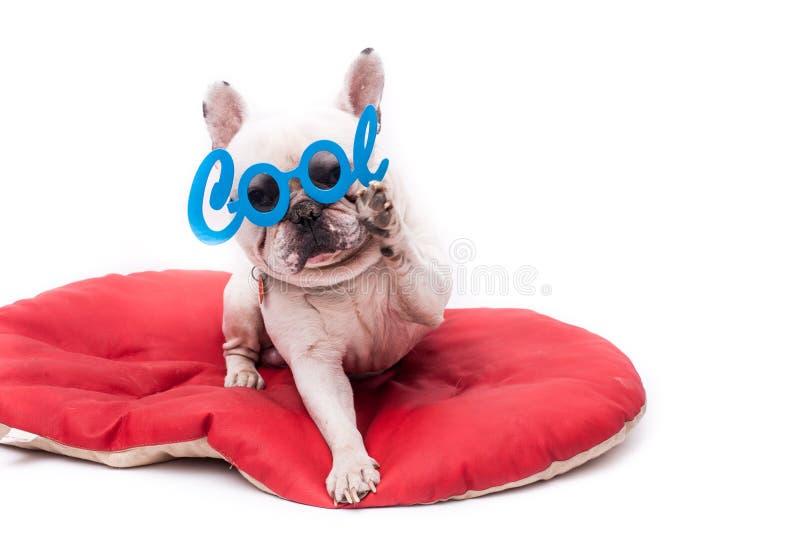 Bulldog francese fresco immagini stock libere da diritti