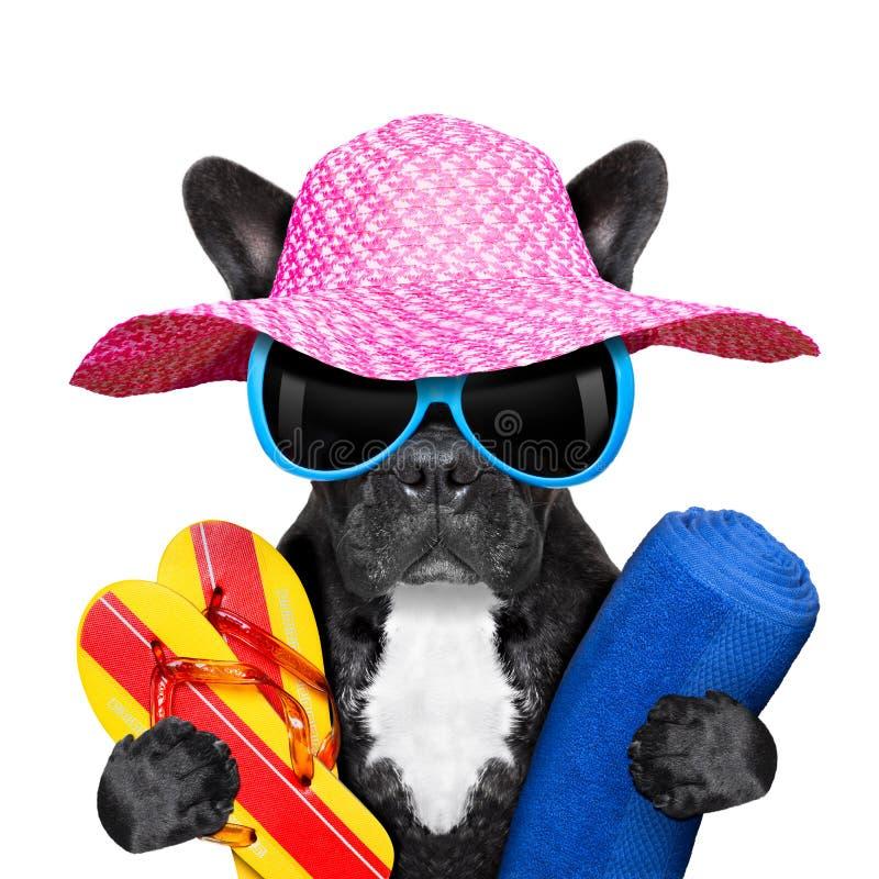 Bulldog francese sulla vacanza fotografia stock libera da diritti