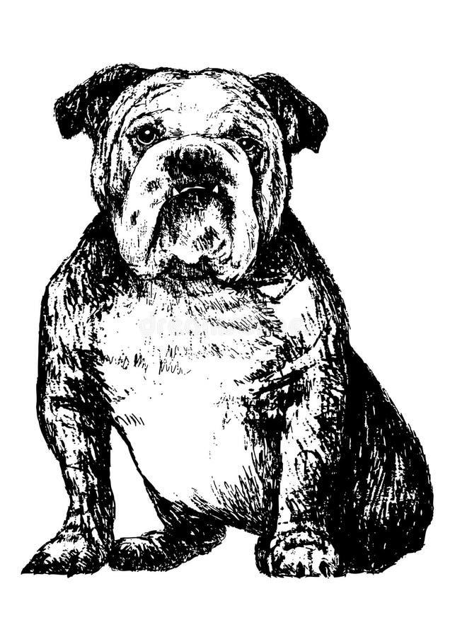 Bulldog. Image of black and white bulldog , hand draw vector royalty free illustration