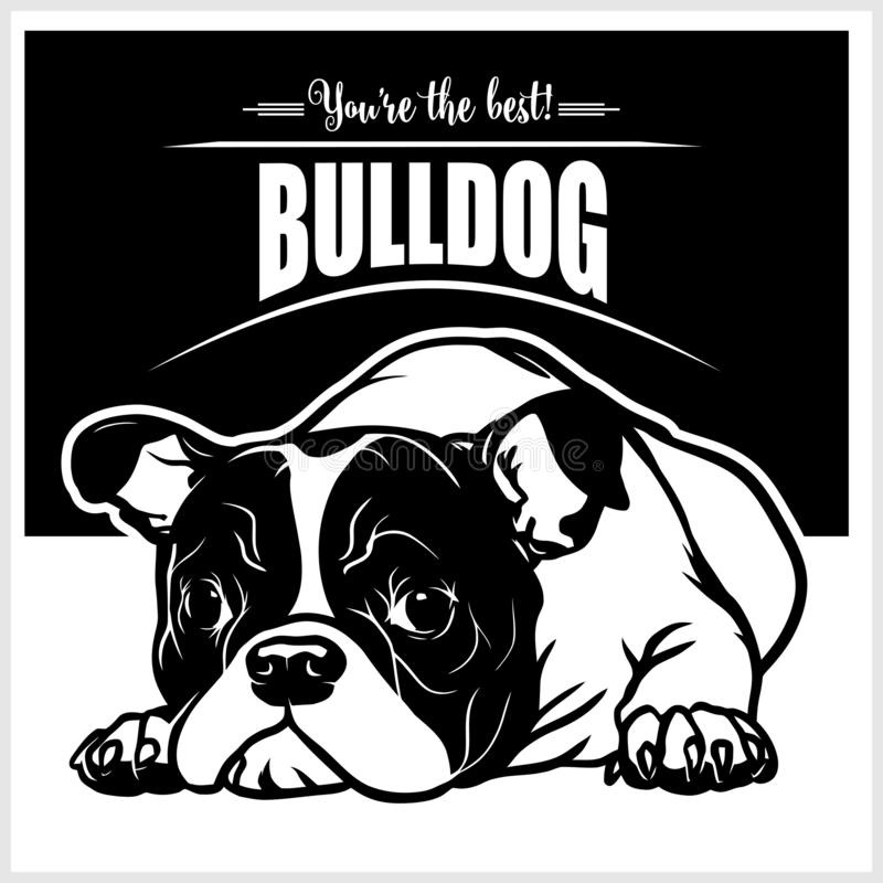 Bulldog - vector illustration for t-shirt, logo and template badges vector illustration