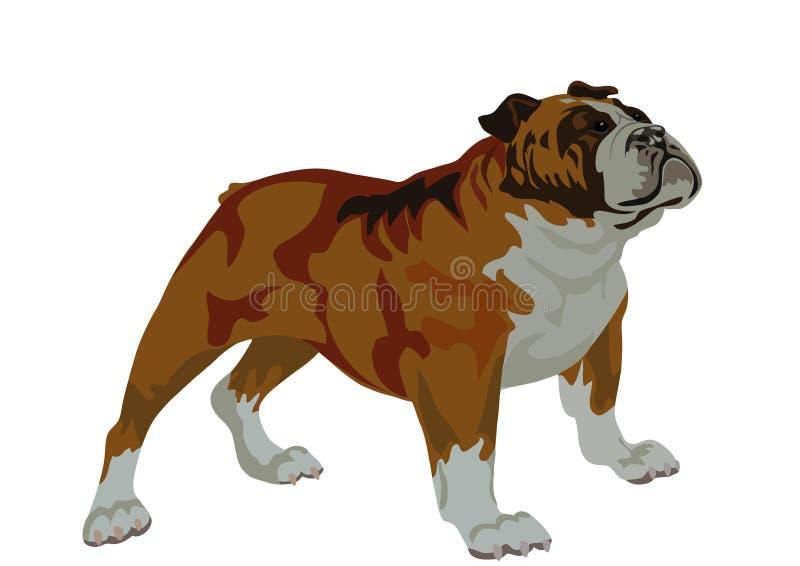 bulldogg stock illustrationer