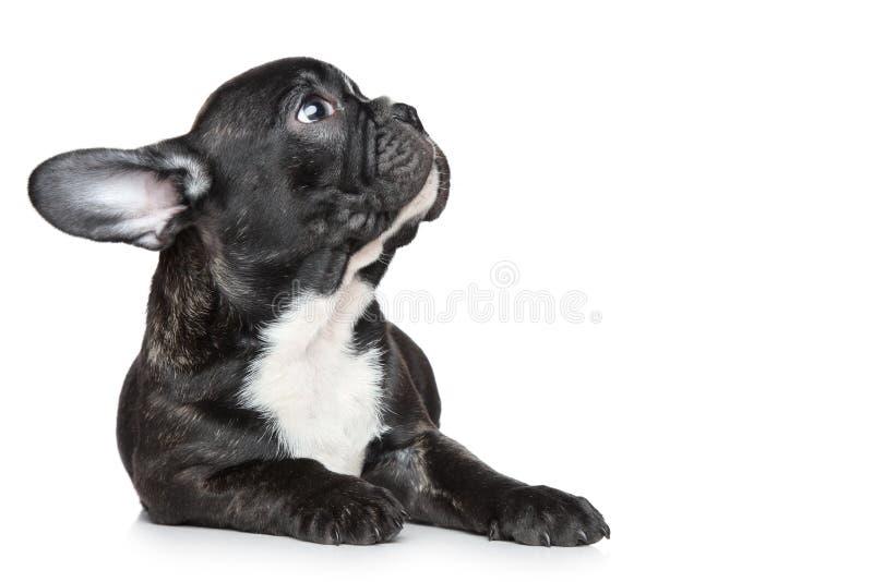 bulldogg som ser upp valpen arkivbild
