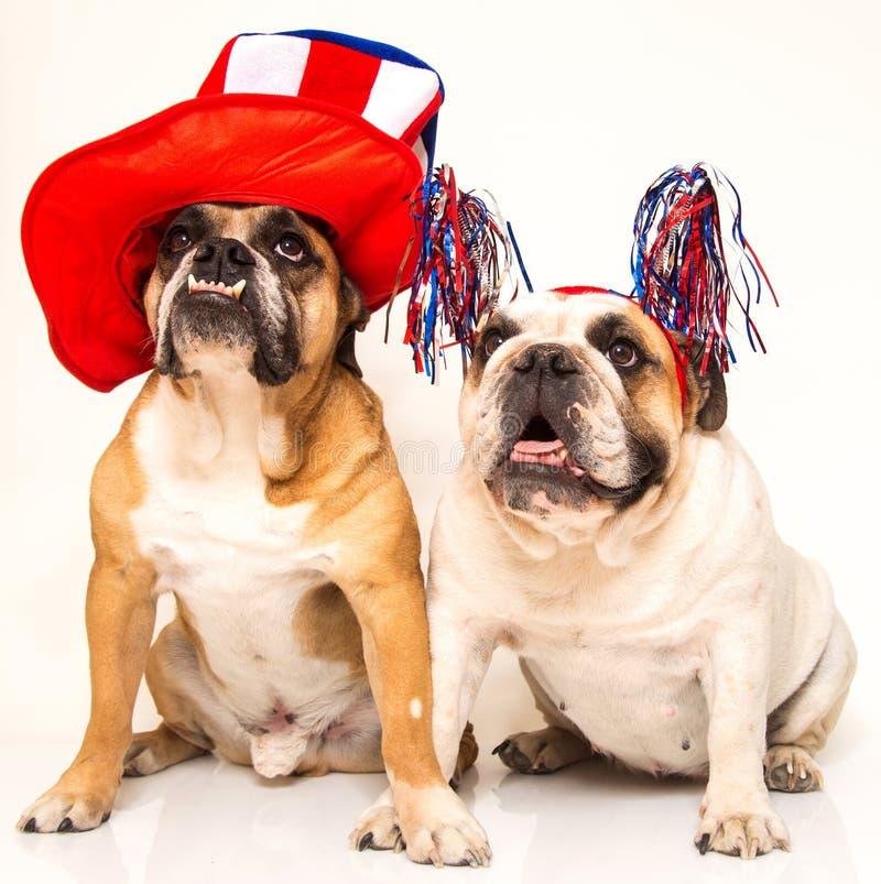 Bulldoggen gekleidet für Juli 4. lizenzfreie stockfotos