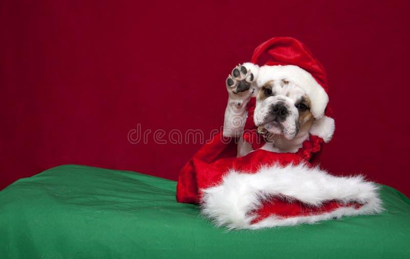 Bulldoggewelpe Feiertag Portrait aufgebend lizenzfreie stockfotos
