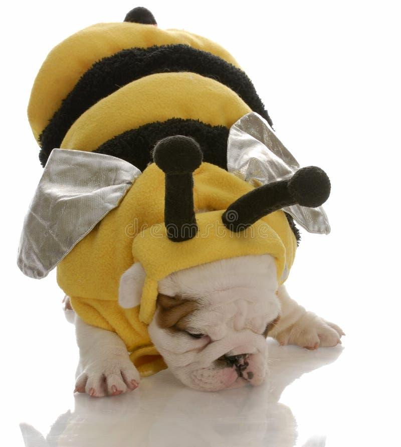 Download Bulldoggewelpe Gekleidet Als Biene Stockbild - Bild von halloween, stier: 12203051