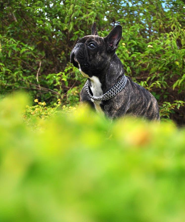bulldogging arkivfoto