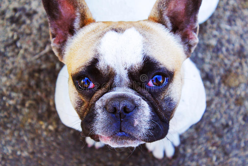 bulldogging arkivfoton