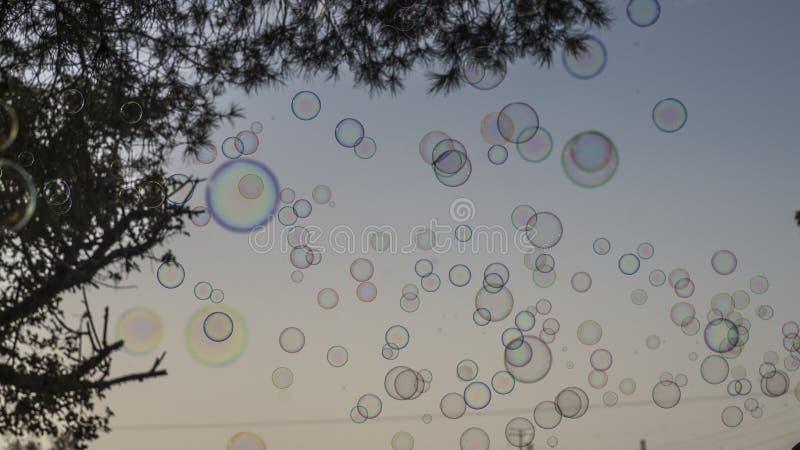 Bulles de savon avec l'arbre sur le ciel photographie stock libre de droits