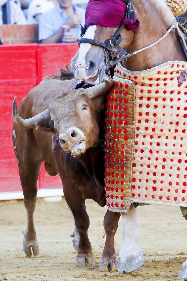 bullfight fotos de archivo libres de regalías