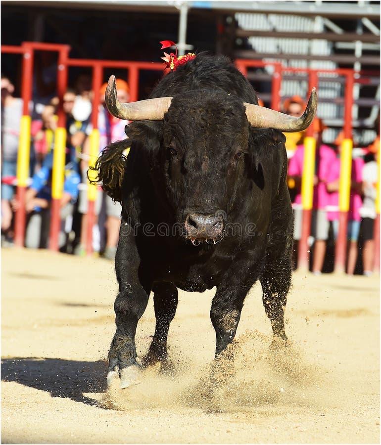 bullfight imagen de archivo