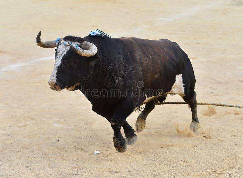 bullfight imagenes de archivo