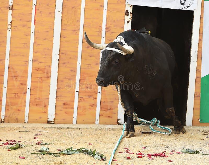 bullfight fotografía de archivo libre de regalías