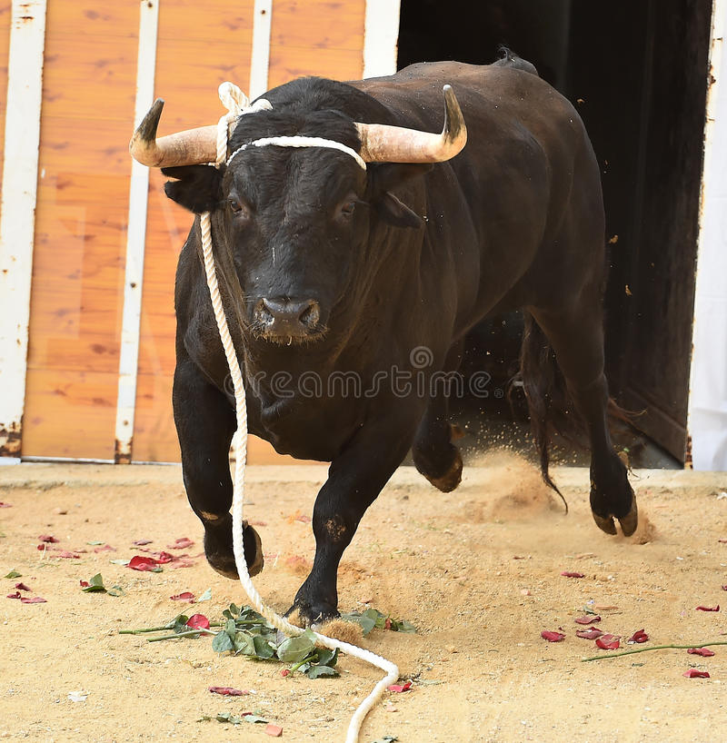 bullfight imagen de archivo libre de regalías