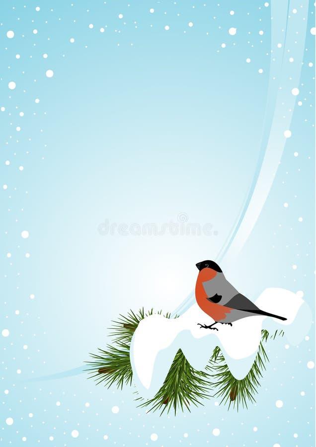 Bullfinch illustration stock