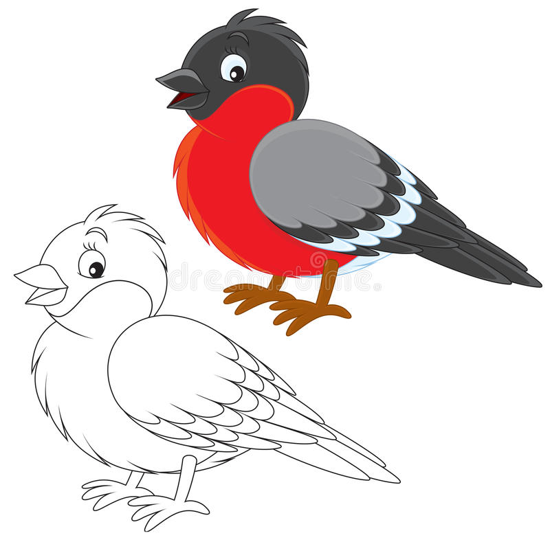 Bullfinch. Color illustration and black and white outline on a white background vector illustration