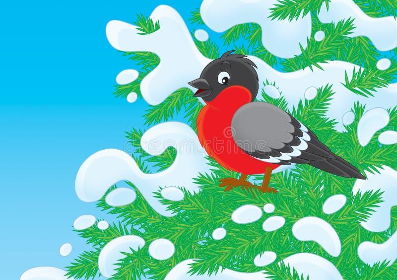 Bullfinch. Perching on a fir branch in snowy winter royalty free illustration