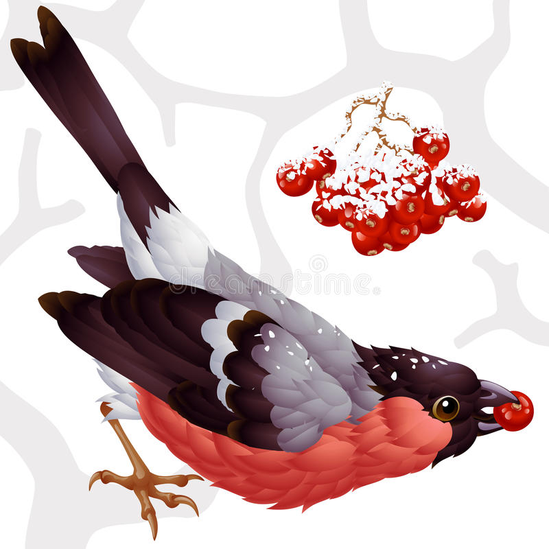 Bullfinch and ashberry. Vector bullfinch and red ashberry royalty free illustration
