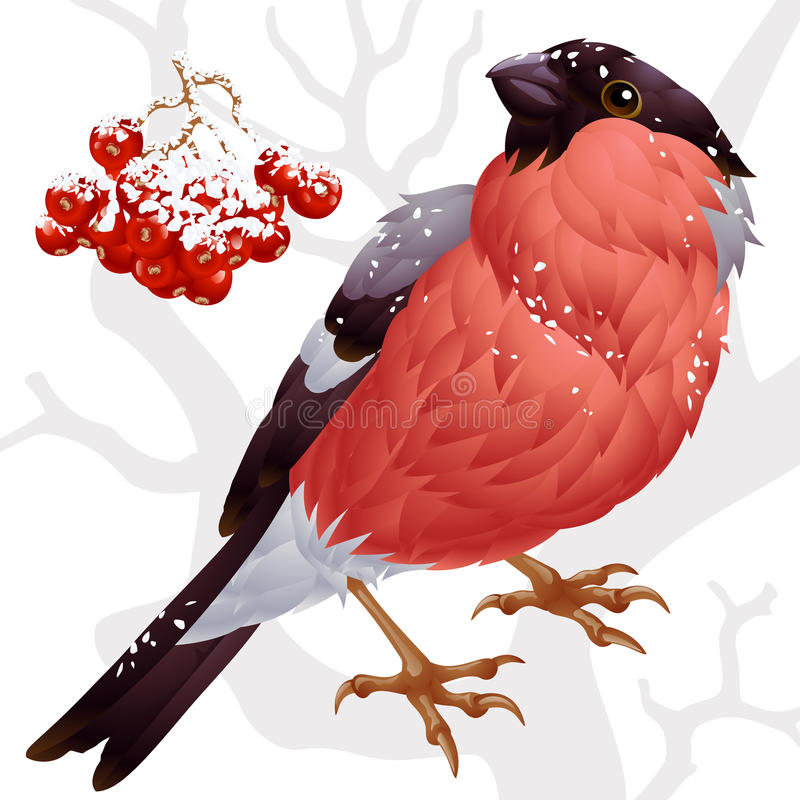 Bullfinch and ashberry 2. Vector bullfinch and red ashberry stock illustration