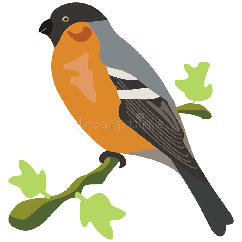 Bullfinch bird. Illustration and contours of bullfinch bird stock illustration