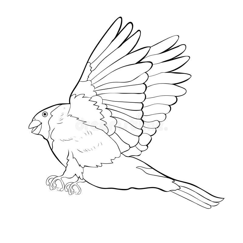 Bullfinch bird coloring winter red belly vector illustration. Bullfinch bird coloring winter red belly. vector illustration stock illustration