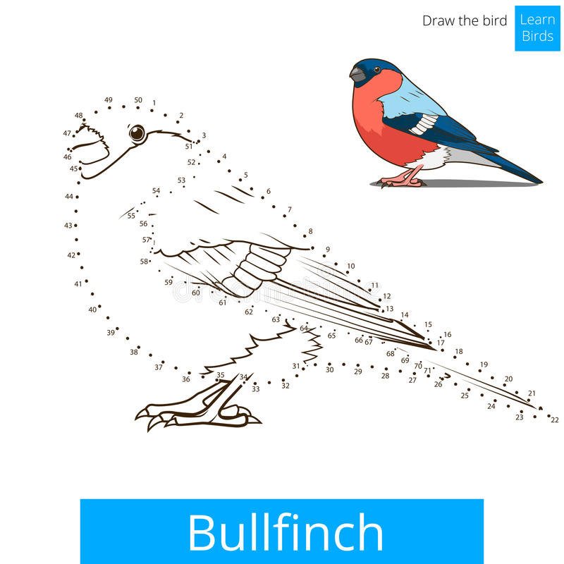 Download Bullfinch Bird Learn To Draw Vector Stock