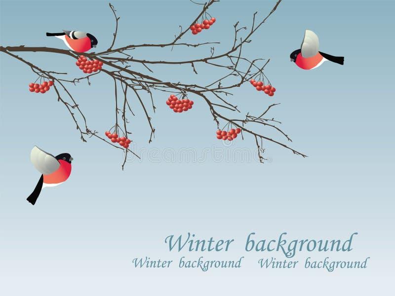 Bullfinch on the branch. Vector illustration vector illustration