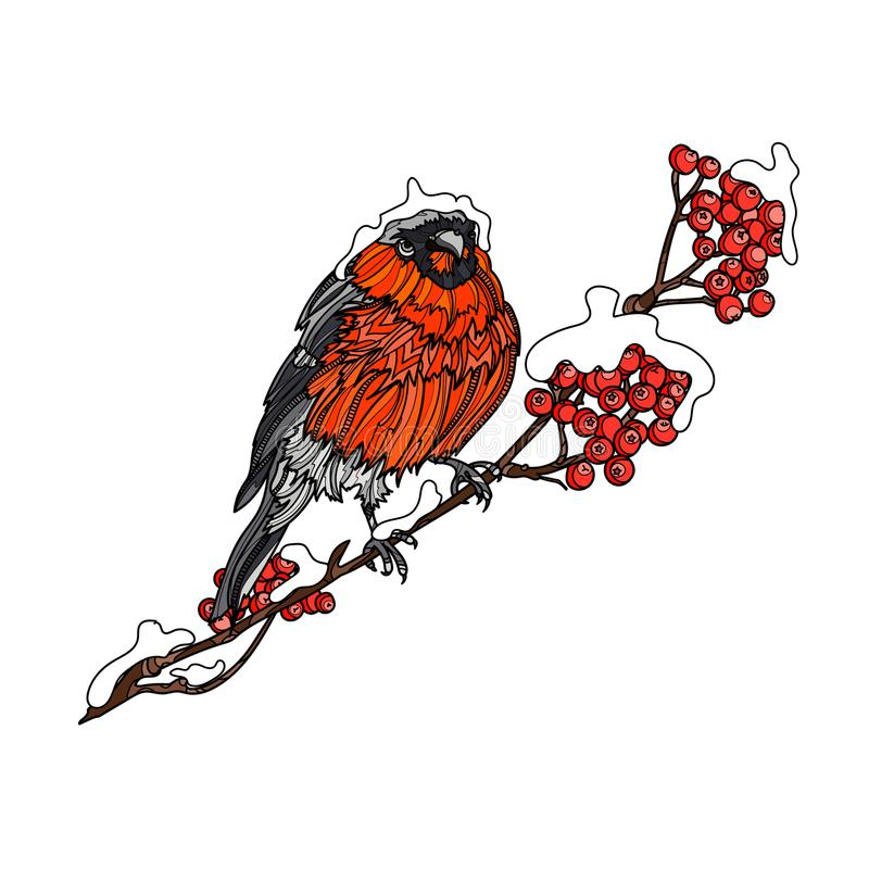 Bullfinch on the branch of mountain ash. royalty free illustration