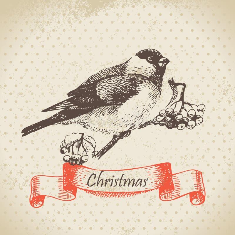 Bullfinch de Noël et ashberry illustration de vecteur