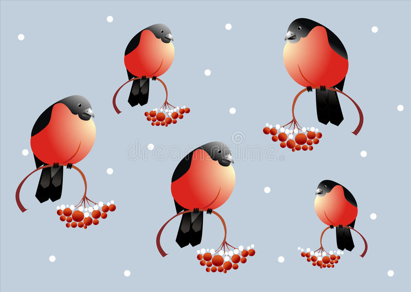 Bullfinch et sorbe illustration stock