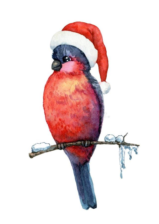 Bullfinch. Funny bird bullfinch in christmas cap on white background. Watercolor illustration vector illustration