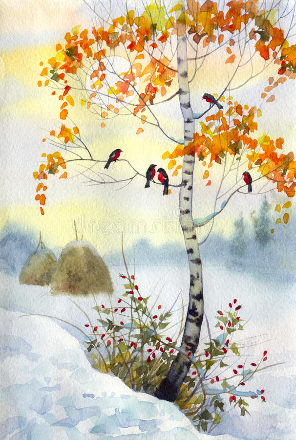 Free Bullfinch On The Birch Royalty Free Stock Photo - 14057555