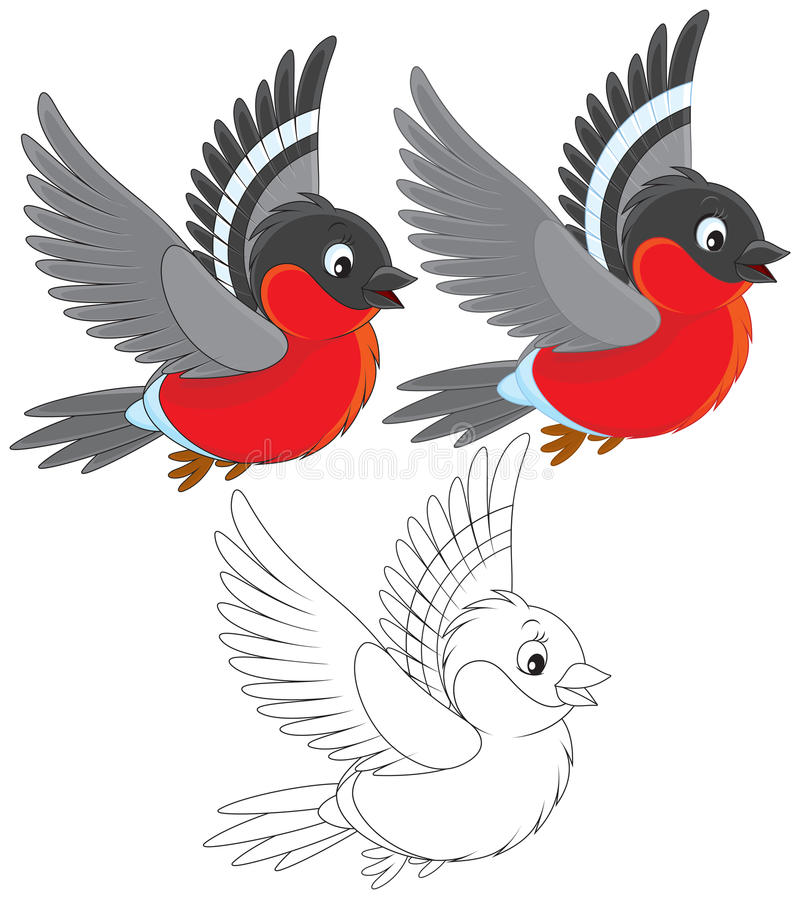 Bullfinch. Red bullfinch flying, color and black-and-white outline illustrations on a white background vector illustration