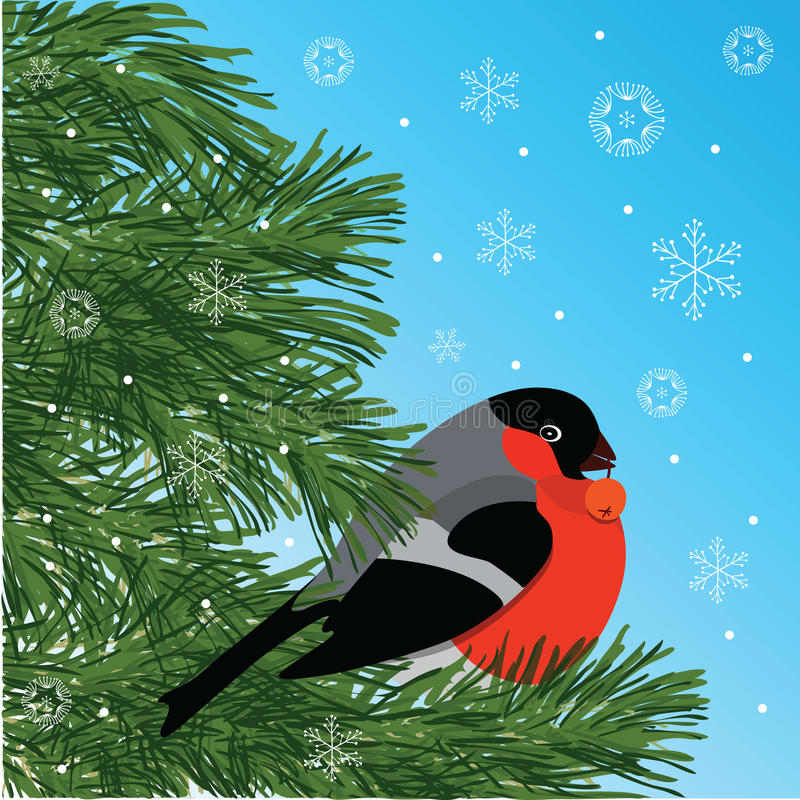 Bullfinch with rowanberry sitting on conifer branch, blue background and snowflakes, vector illustration royalty free stock images