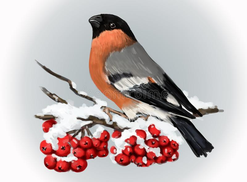 Bullfinch sitting on snowcovered branch of mountain ash. Winter nature. vector illustration