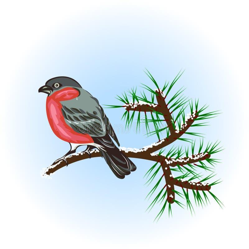 Bullfinch sur le branchement de pin illustration libre de droits