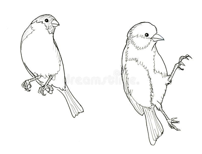 Bullfinch and titmouse. Two birds. Ink line illustration. Raster version royalty free illustration