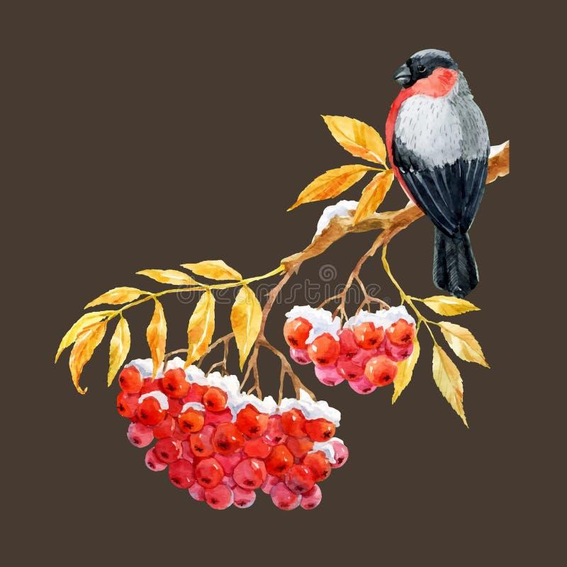 Bullfinch und ashberry stock abbildung