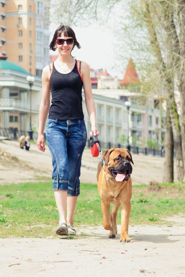 Bullmastiff de femme et de chien photographie stock