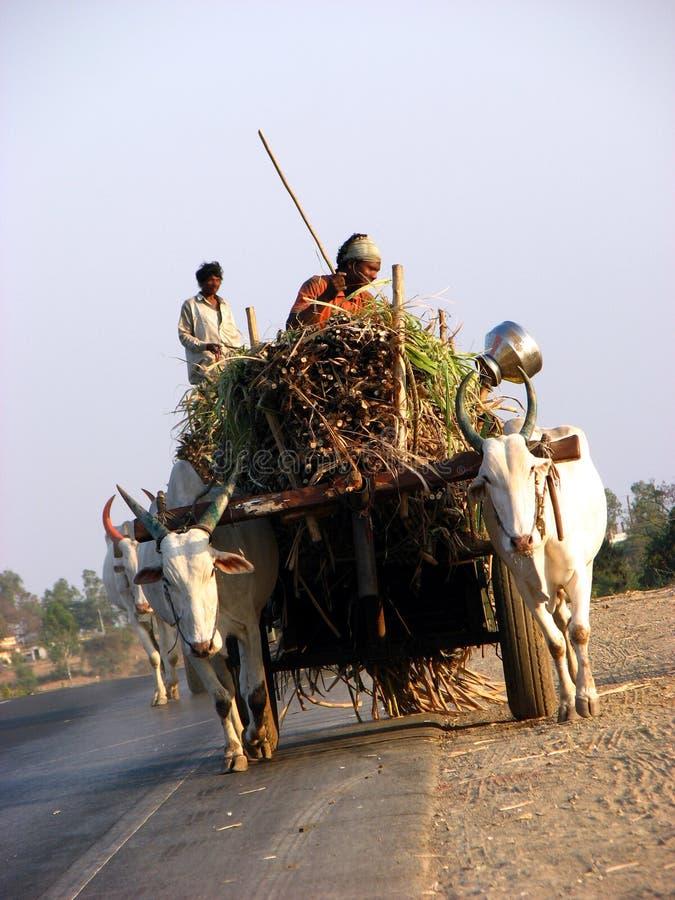 Download Bullock Cart stock photo. Image of burdened, explore, agriculture - 1940746