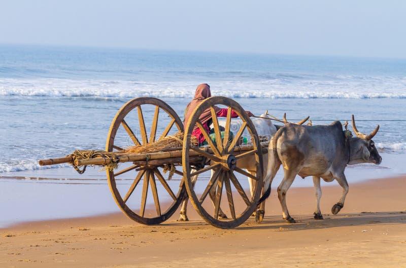 Bullock Cart at Indian Tropical Beach stock photo