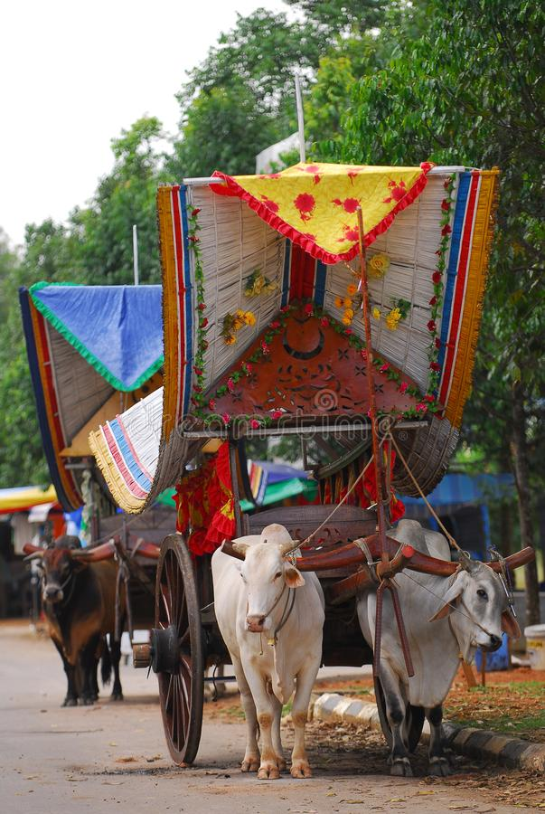 Bullock cart ride. To experience this bullock cart ride, travellers need to go to Telok Mas, which is half an hour away from Melaka city centre by car royalty free stock photography