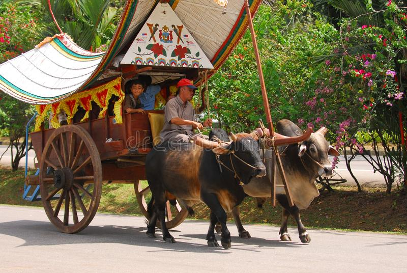 Bullock cart ride. To experience this bullock cart ride, travellers need to go to Telok Mas, which is half an hour away from Melaka city centre by car stock images