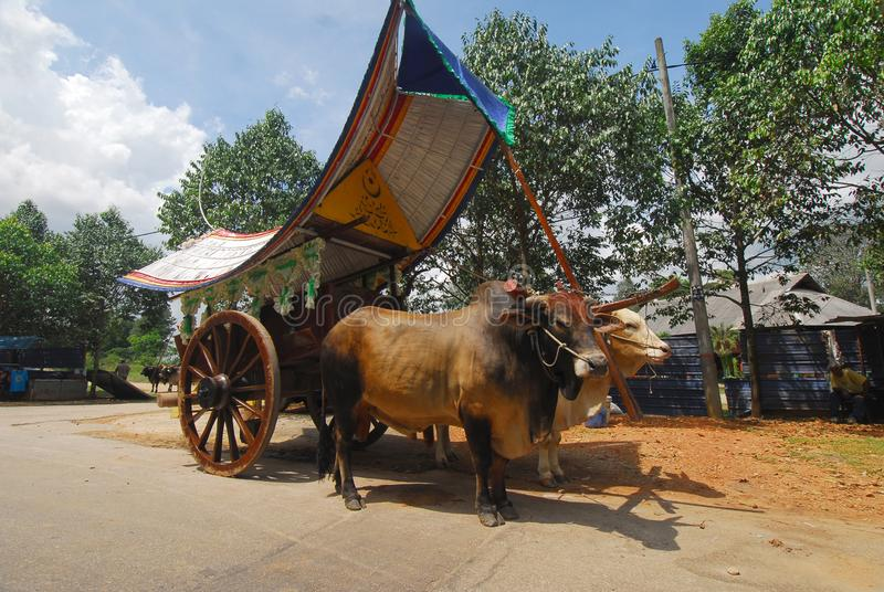 Bullock cart ride. To experience this bullock cart ride, travellers need to go to Telok Mas, which is half an hour away from Melaka city centre by car stock photography