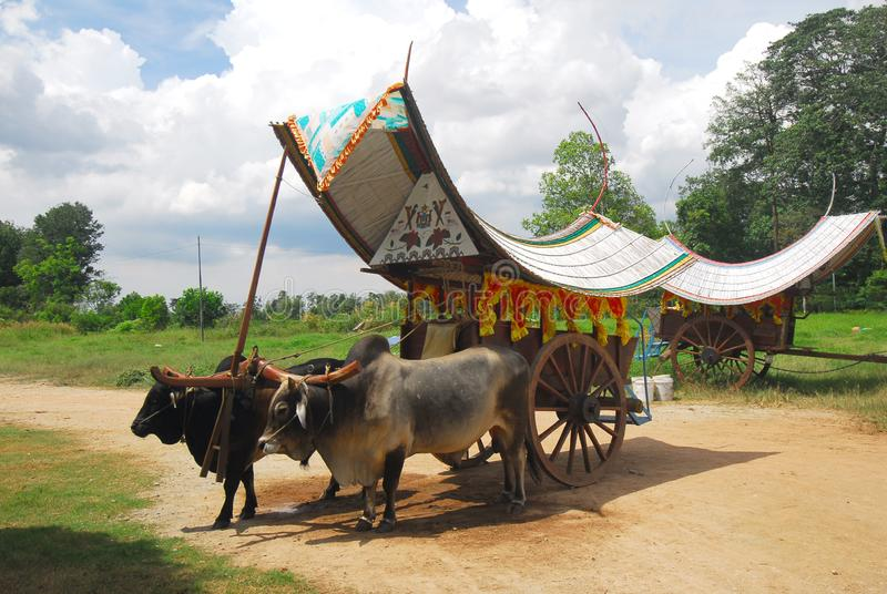 Bullock cart ride. To experience this bullock cart ride, travellers need to go to Telok Mas, which is half an hour away from Melaka city centre by car royalty free stock photo