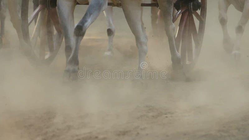 Bullock fury rasa w miasteczku Nagaon blisko Alibaug w maharashtra India zbiory