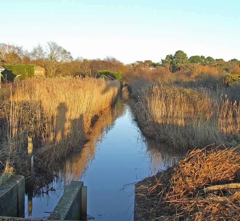 Download Bullrushed stream stock photo. Image of remote, sluice - 36790314