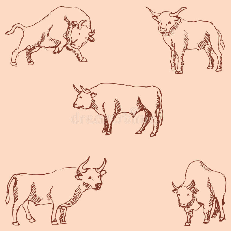 Bulls. Sketch pencil. Drawing by hand. Vintage colors. Vector. Bulls. Sketch pencil. Drawing by hand. Vintage colors Vector image vector illustration